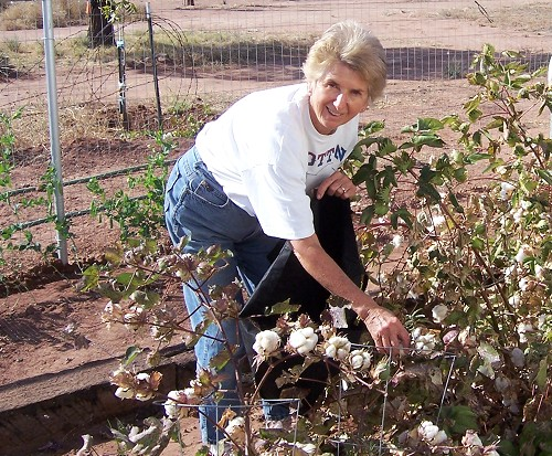 Joan's Cotton Harvest